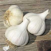 garlic36