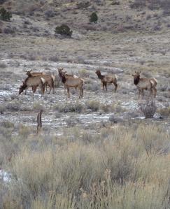 April Fools elk.