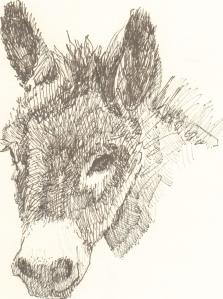 burrohead.jpg